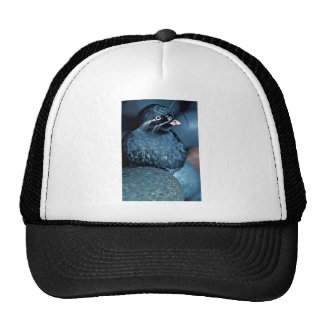 Whiskered Auklet Hats