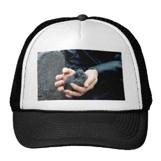 Whiskered Auklets Mesh Hats