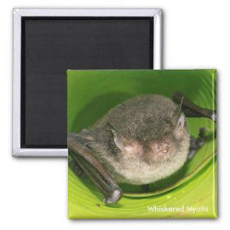 Whiskered Myotis Bat Magnet