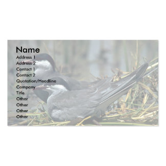Whiskered Tern Business Card Templates