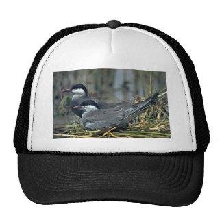 Whiskered Tern Trucker Hats