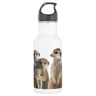 Whiskers 532 Ml Water Bottle