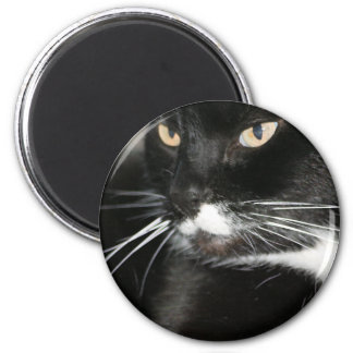 Whiskers Magnet