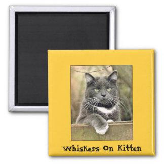 Whiskers On Kitten Square Magnet