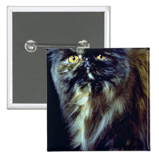 Whiskers Pinback Button