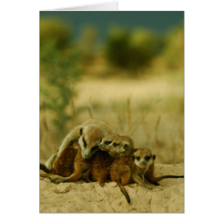 Whiskers pups - KMP Card 19
