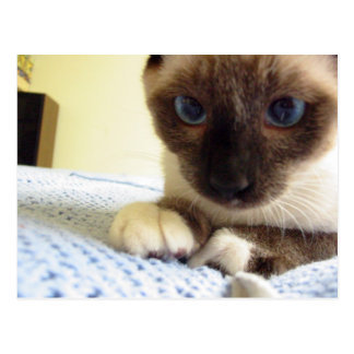 Whiskey the Snowshoe Postcard