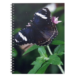 White Admiral Butterfly Notebook