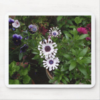 White African Daisy Mousepads