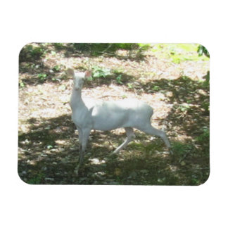 White/Albino Deer 3x4 Photo Magnet
