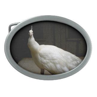 White Albino Peacock Belt Buckles