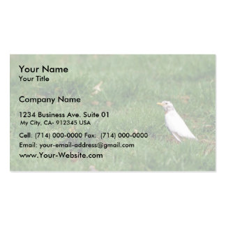 White American robin Business Card Template