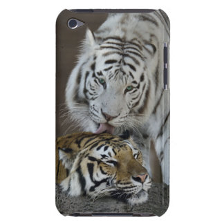 White And Brown Tigers Resting iPod Case-Mate Cases