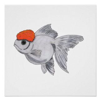 White and Orange Oranda Goldfish Aquarium Pet Fish