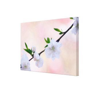 White and Pink Peach Blossom Canvas Print