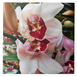 White and Pink Phalaenopsis Orchid Ceramic Tile