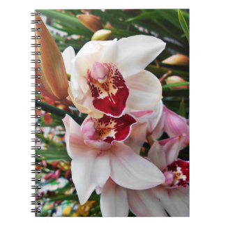 White and Pink Phalaenopsis Orchid Spiral Notebook
