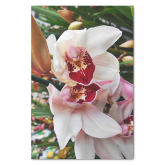 White and Pink Phalaenopsis Orchid Tissue Paper