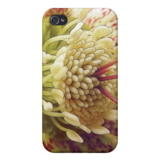 White And Purple Hellebore Covers For iPhone 4