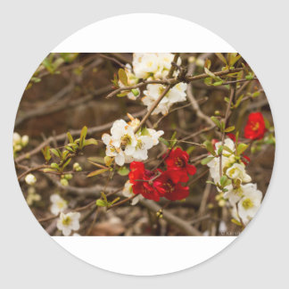 White and Red Blossoms Round Sticker