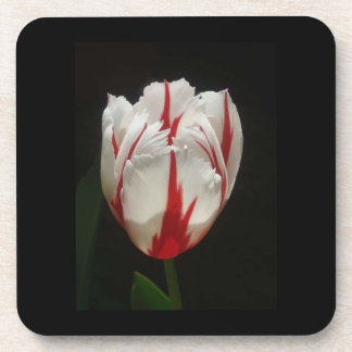 White and Red Tulip Cork Coaster