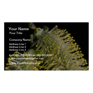 White And Yellow Catkins Closeup flowers Business Cards