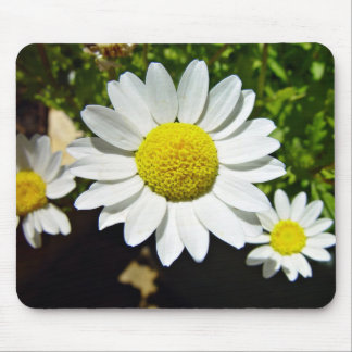 White and Yellow Daisies Mouse Pad