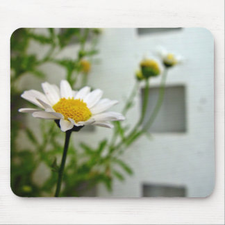 White and Yellow Daisy blossom Mouse Pads