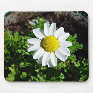 White and Yellow Daisy flower Mouse Pad
