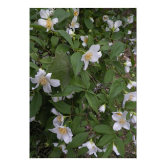 White and Yellow Flowers Photograph Poster