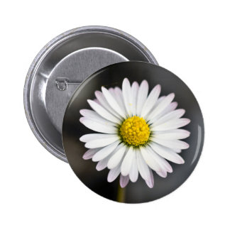 White and Yellow Wild Daisy 6 Cm Round Badge