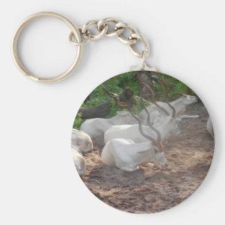 White Antelope Key Ring