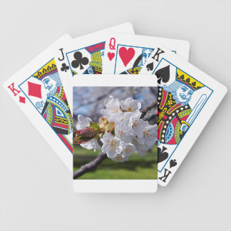 White apple blossoms in spring bicycle playing cards