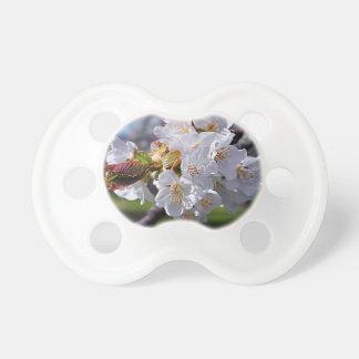White apple blossoms in spring dummy