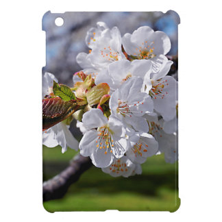 White apple blossoms in spring iPad mini cases