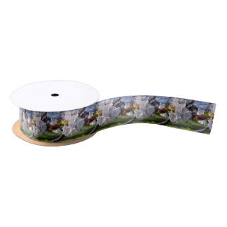 White apple blossoms in spring satin ribbon