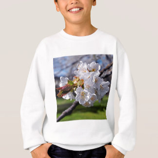 White apple blossoms in spring sweatshirt