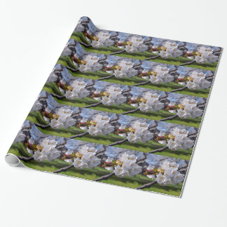 White apple blossoms in spring wrapping paper