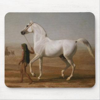 White Arab stallion Mouse Pad