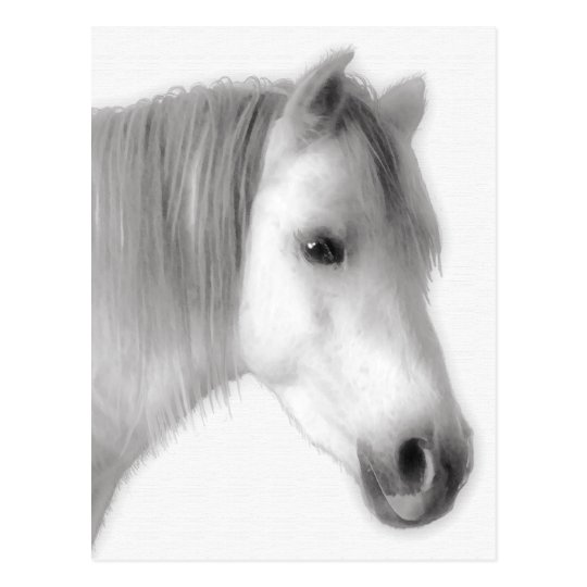 White Arabian Horse Portrait Postcard