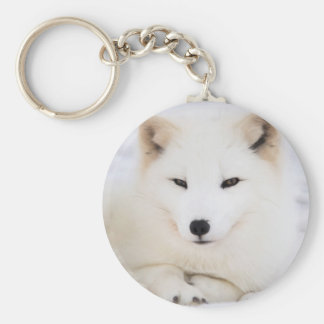 White arctic fox in snow basic round button key ring