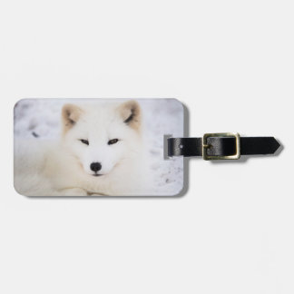 White arctic fox in snow luggage tag
