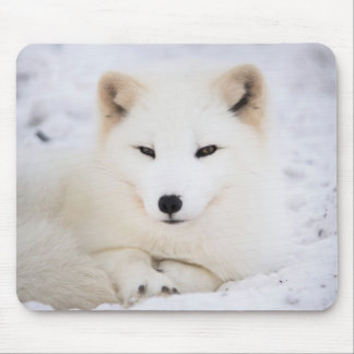 White arctic fox mouse pad