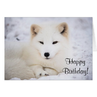 White arctic fox note card