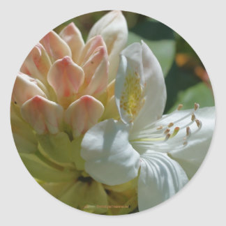 White Azalea Flower Photography Sticker