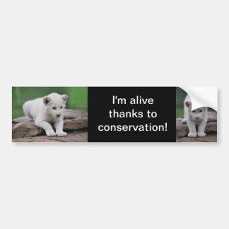 White baby lion cub bumper sticker
