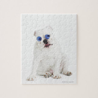 white background, white bulldog, blue tinted puzzle