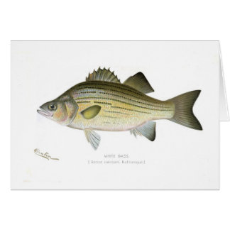 White Bass Card