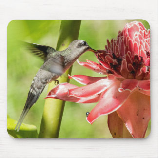 White-bearded Hermit Mouse Pad