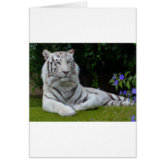 White Bengal Beautiful Tiger Cat Resting Card